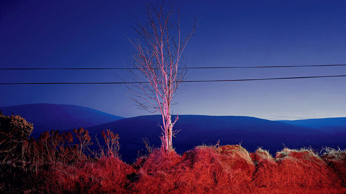Campari Wall: A Country Road. A tree. Evening.
